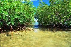 Acqua tropicale Immagini Stock