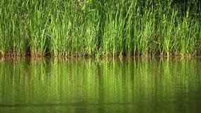 Acqua verde del lago in natura