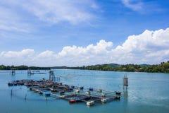 Acquacoltura che coltiva, Tailandia della gabbia Immagini Stock