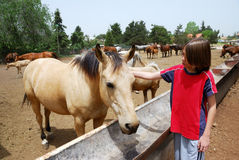 Acquaintance. Of the boy and horse on a farm Stock Image