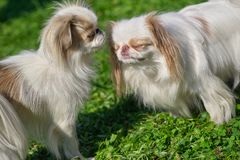 Acquaintance of two dogs stock images
