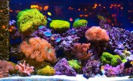 Acquario Fotografie Stock