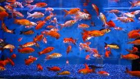 Acquario Immagine Stock Libera da Diritti