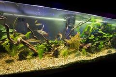 Acquario Fotografia Stock