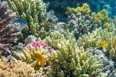 Acquario Fotografia Stock Libera da Diritti