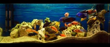 Acquario Immagini Stock Libere da Diritti