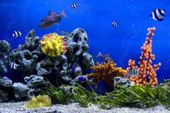 Acquario Immagine Stock
