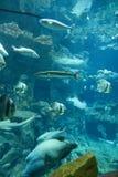 Acquario Immagini Stock
