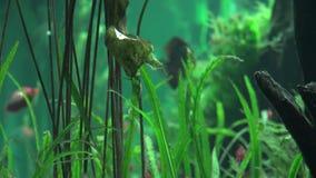 Acquario, carro armato di pesce, Marine Animals stock footage
