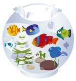 Acquario con i fishs Fotografie Stock
