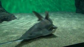 Acquario con un pesce sega stock footage