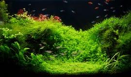 Acquario d'acqua dolce della natura nello stile di Takasi Amano Immagine Stock