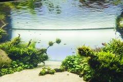 Acquario d'acqua dolce della natura nello stile di Takasi Amano Immagini Stock Libere da Diritti