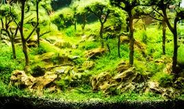 Acquario d'acqua dolce tropicale piantato Fotografia Stock