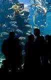 Acquario dei pesci immagini stock