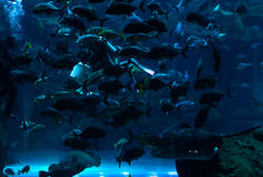 Acquario del Dubai Fotografia Stock