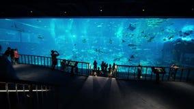 Acquario del mare nell'isola Singapore di Sentosa stock footage
