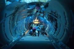 Acquario della Doubai a Dubaimall Immagini Stock