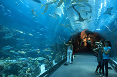 Acquario della Doubai a Dubaimall Fotografia Stock Libera da Diritti