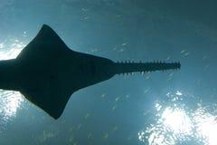 Acquario della Georgia Fotografia Stock Libera da Diritti