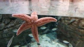 Acquario di Costantinopoli delle stelle marine Fotografie Stock Libere da Diritti