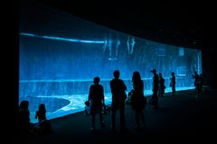 People watching dolphins in the largest Aquarium in Genoa, Europe has 600 animal species and 200 vegetal species. The Acquario di Genova has 12,000 specimens stock photography