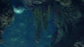 Acquario di Genova, guarnizioni che nuotano underwater stock footage