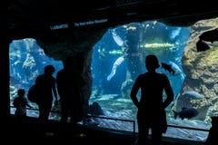 Acquario di Genova, Italia fotografia stock libera da diritti