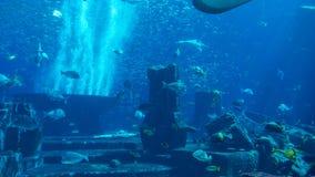 Acquario enorme riempito di pesce Fotografia Stock