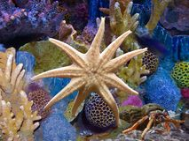 Acquario esotico e stelle marine Fotografie Stock