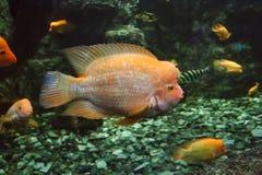 acquario marino nel lové del ¡ di Hradec Krà in repubblica Ceca immagine stock
