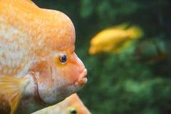 acquario marino nel lové del ¡ di Hradec Krà in repubblica Ceca fotografia stock