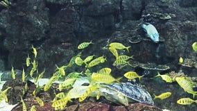 Acquario marino in pieno dei pesci e delle piante tropicali Alimentazione della tartaruga archivi video