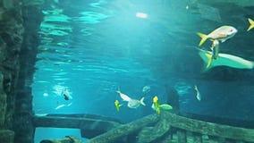 Acquario marino in pieno dei pesci e delle piante tropicali archivi video