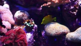 Acquario o Oceanarium, carro armato di pesce, Coral Reef, animali archivi video