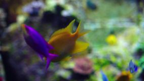 Acquario o Oceanarium, carro armato di pesce, Coral Reef, animali stock footage
