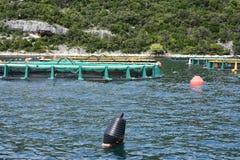 Acquario per produzione del pesce nel mare Fotografia Stock