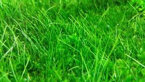 Acquario verde immagini stock libere da diritti