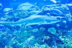 Acquario vita subacqueo di Barcellona Fotografia Stock