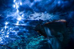 Acquarium Full of Beautiful Tropical Fishes. Photo Picture an Acquarium Full of Beautiful Tropical Fishes stock photography