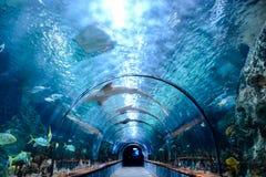 Acquarium voll von schönen tropischen Fischen Stockbilder