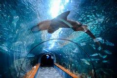 Acquarium voll von schönen tropischen Fischen Stockfoto
