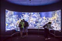 Acquarium voll von schönen tropischen Fischen Lizenzfreies Stockfoto