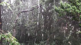 Acquazzone sulle piante e sugli alberi in autunno archivi video