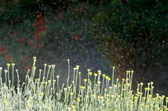 Acquazzoni del giardino Fotografia Stock Libera da Diritti