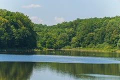 Acque di bello stagno con le anatre che nuotano alla ricerca delle creature viventi Con gli alberi verdi fertili che crescono sul Fotografia Stock Libera da Diritti