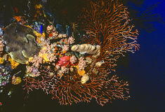 Acque profonde gorgonian fotografia stock libera da diritti