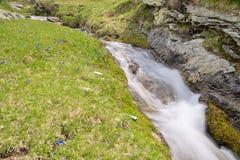 Acque selvagge nelle alpi Fotografia Stock