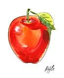 Acquerello Apple Royalty Illustrazione gratis