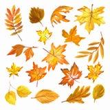 Acquerello Autumn Leaves Set Fotografia Stock